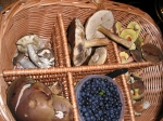 houby a borůvky